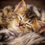 Crib Sleeping Guide