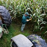 Americans are narrowly divided over health effects of genetically modified foods