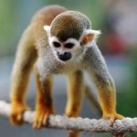 Retired FDA research monkeys find new home and music in Florida