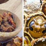Striking Health Benefits of Bee Propolis and Royal Jelly