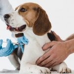 Why it's important to vaccinate your dog and cat