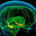 Depression may reduce the amount of white matter in the brain