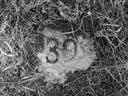 A grave marker denoting one of 72 graves at the Battleford Industrial School cemetery. The graves were excavated in 1974 by a team from the University of Saskatchewan.